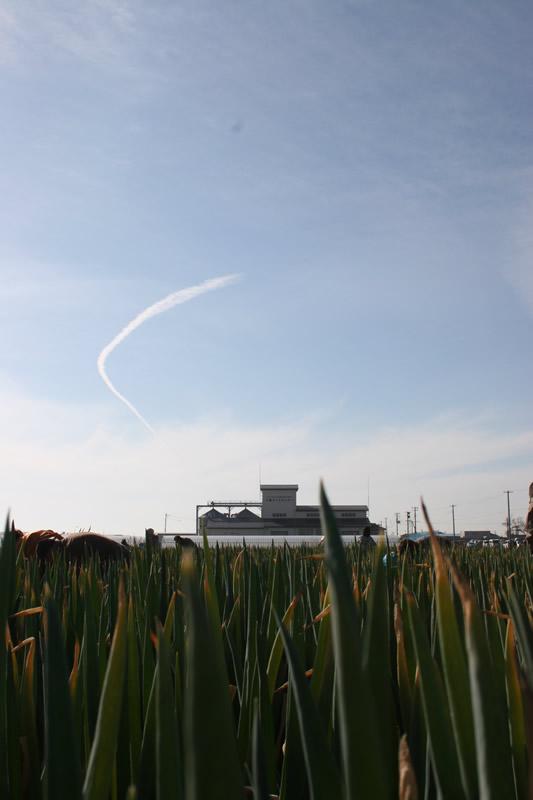 ねぎから見るライスセンターと空