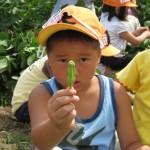 枝豆収穫体験②