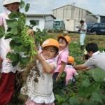 枝豆収穫体験③