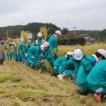 H21 稲刈り体験①