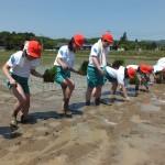 平成28年度 仙台市立大沢小学校児童による田植え作業体験が開催されました
