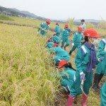 H28 稲刈り体験11
