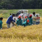 平成29年度 仙台市立大沢小学校児童による稲刈り作業体験が開催されました