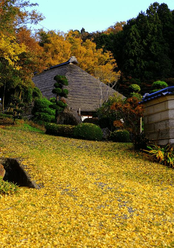 晩秋の庭先