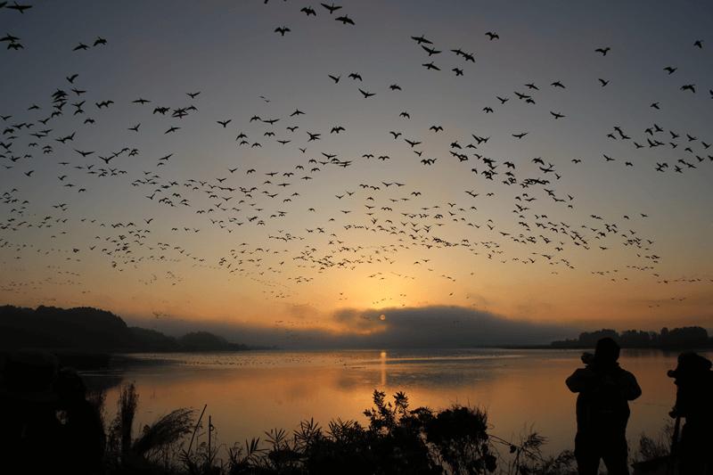 水と渡り鳥