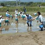 令和元年度 仙台市立大沢小学校児童による田植え作業体験が開催されました